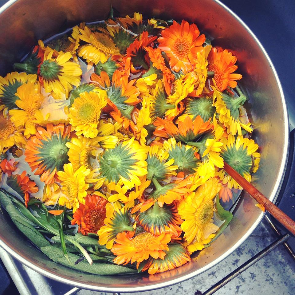 calendula in pot.jpg