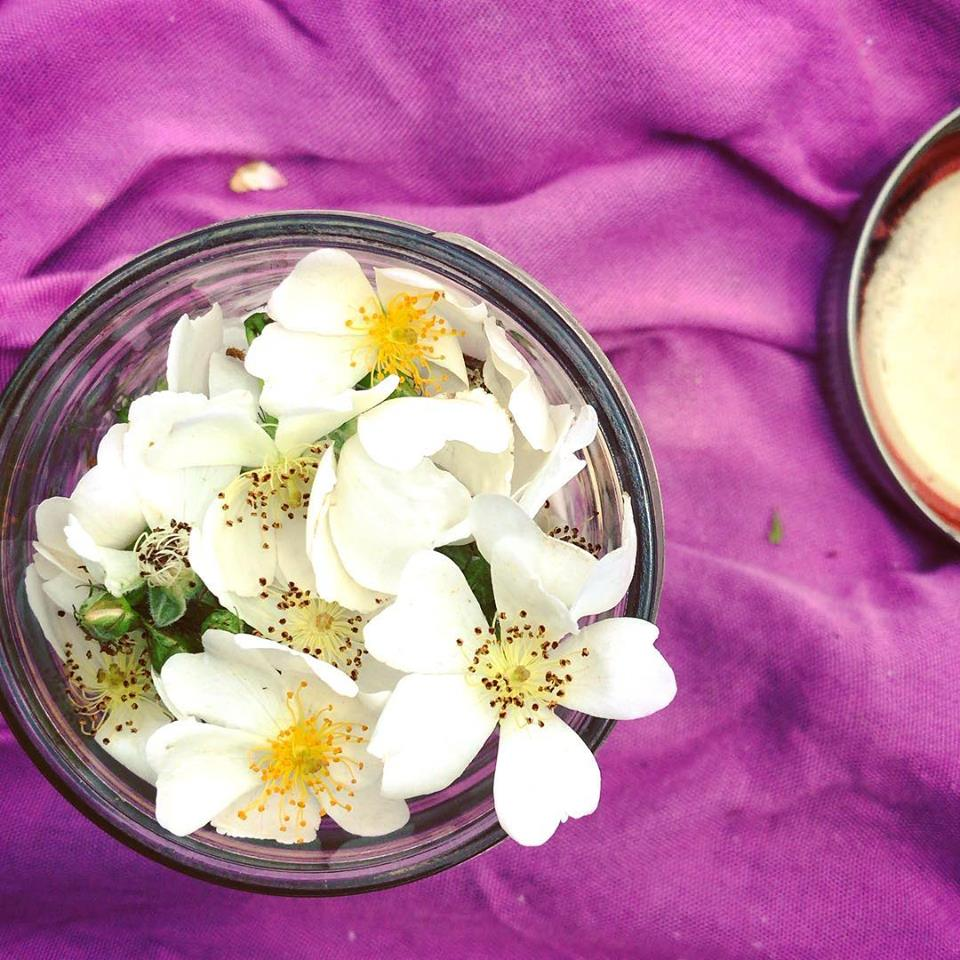wild rose honey prep.jpg