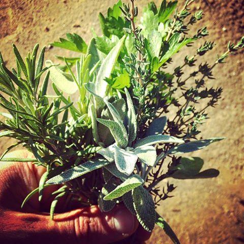 kitchen herbs.jpg
