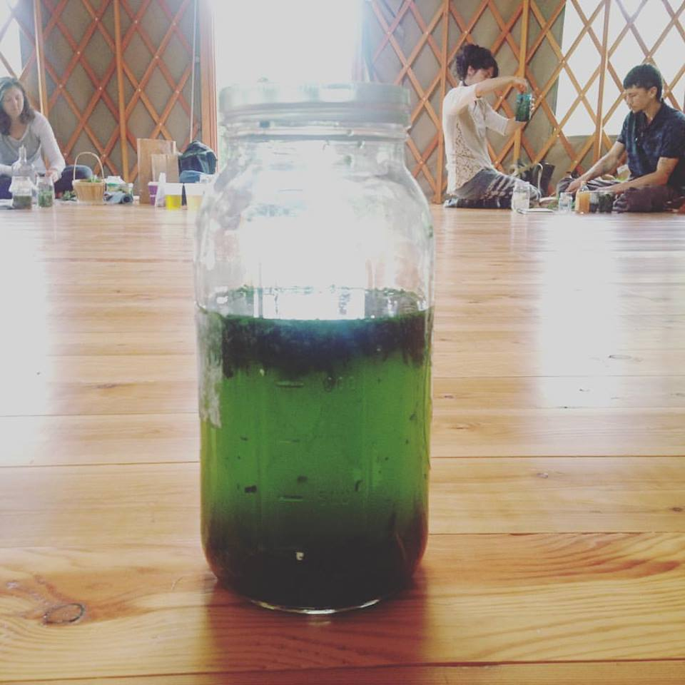 green drink with apprentices in yurt.jpg