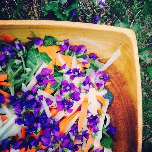 Violet leaves and flowers in a Wild Salad- a great way to get Violet into your diet.