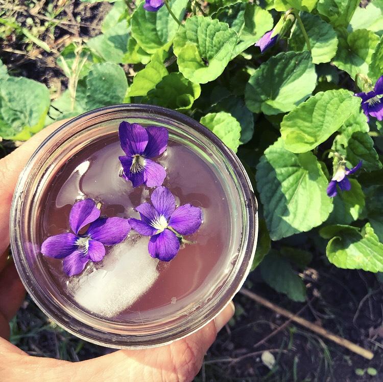 violet spritzer.jpg