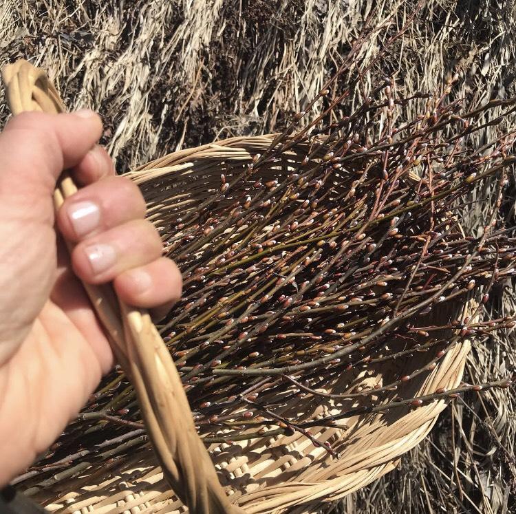 willow bark in basket.jpg