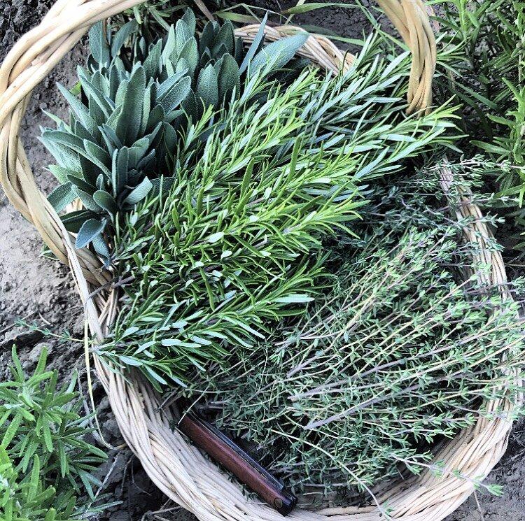 kitchen herbs in basket 2019- 2.jpg