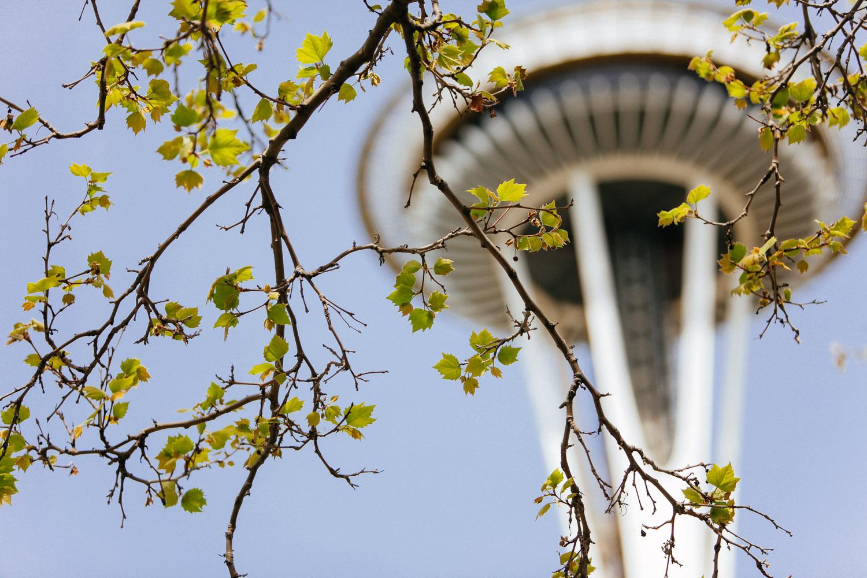SqSpPort-Seattle-8847.jpg