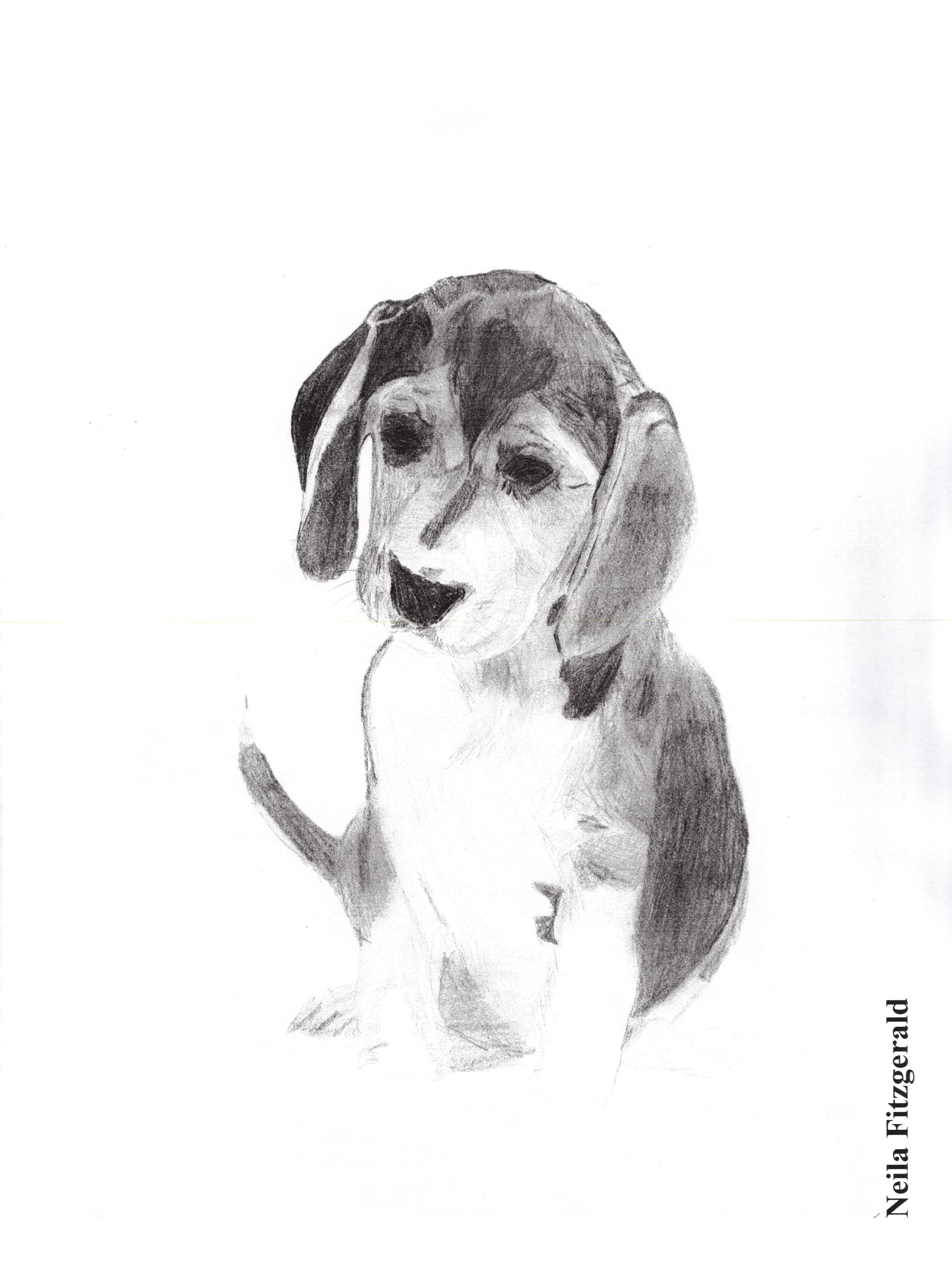 Puppy!.jpg