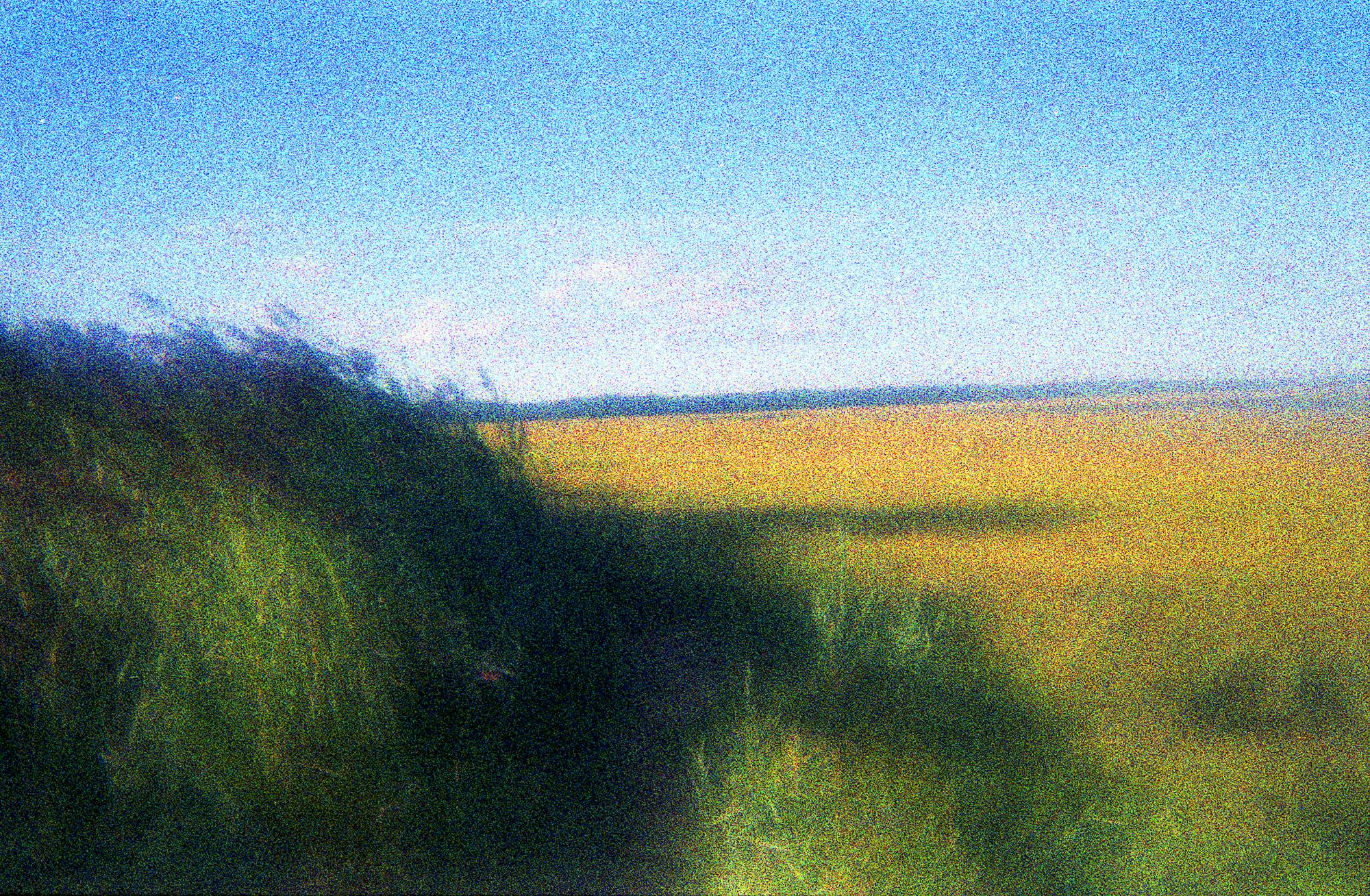 Grasses#3a.jpg