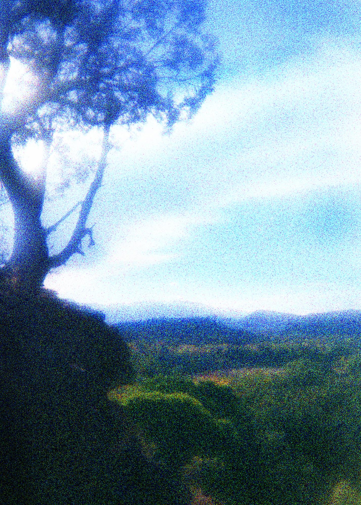 LandscapeTree5x7.jpg