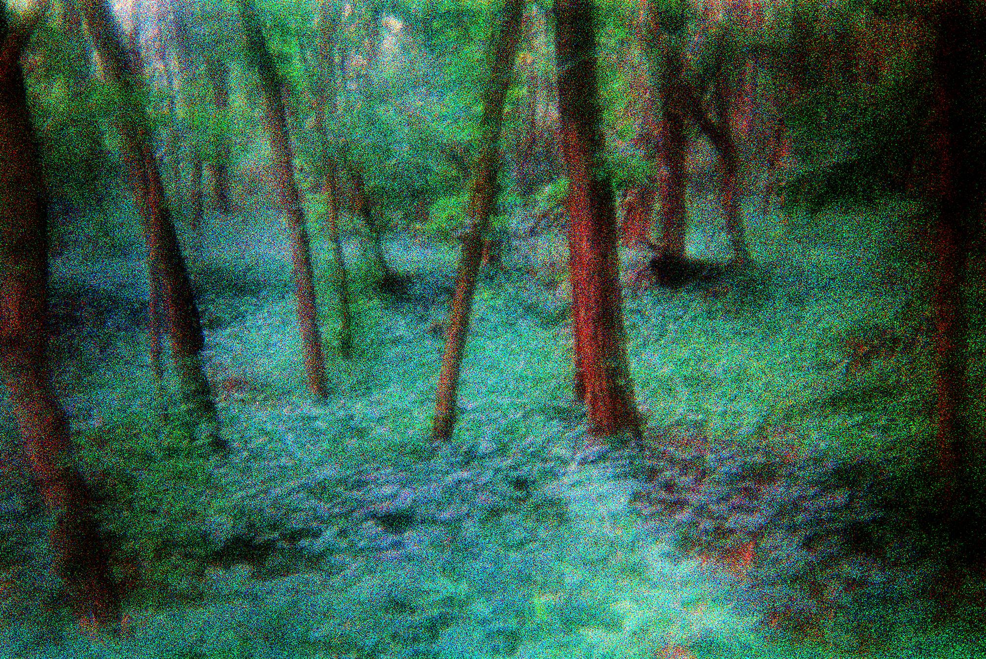 treesA.jpg