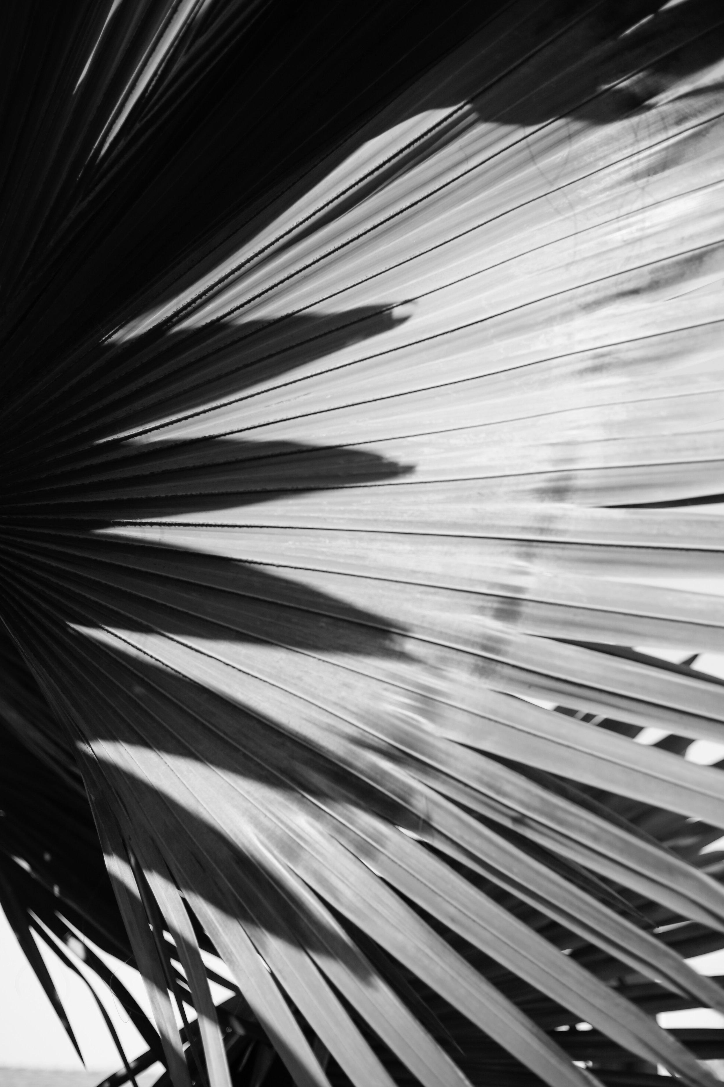 Textures Of The Sea… - Model: IndagoPhotography: Sophie HaberLocation: Santa Barbara