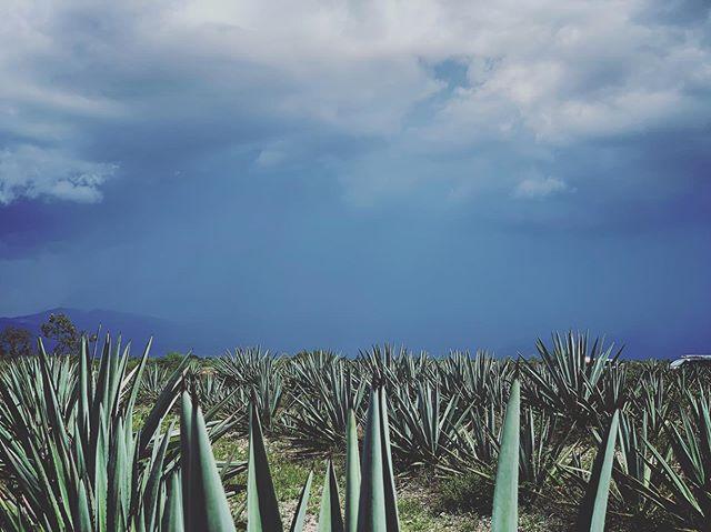 Tierra de Maguey . . . .  #mezcal #oaxaca