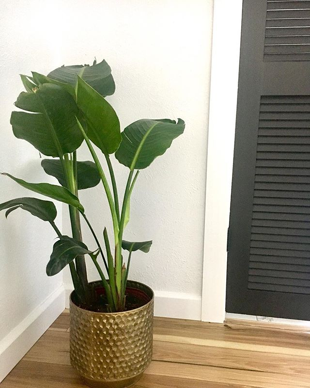 Natural air purifier with an added bonus of beauty! I love filling random corners with plants because they make me happy. #empoweredbynutrition #plantsofinstagram #naturalliving #boho #plantsmakepeoplehappy #nature
