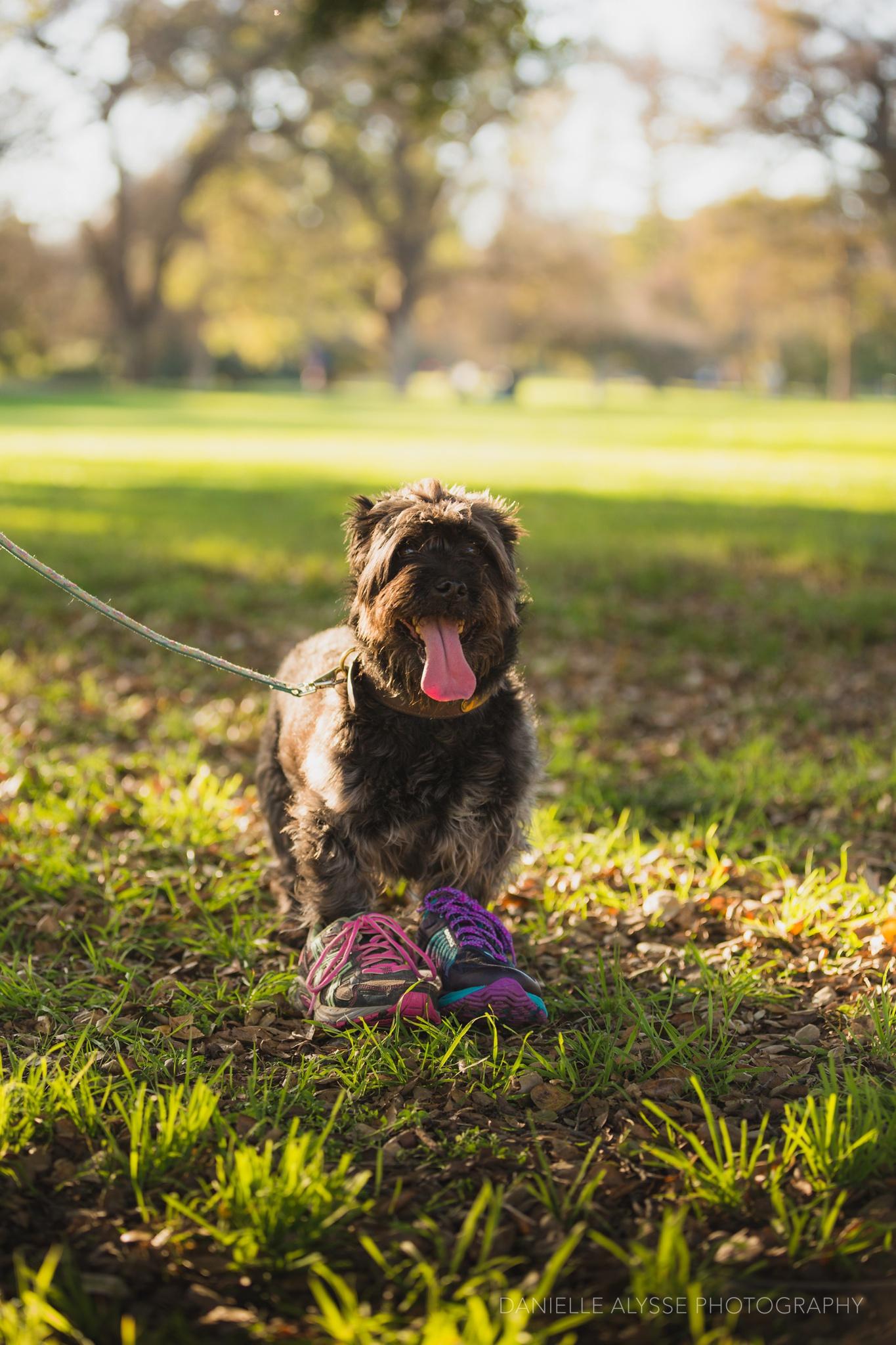 180205_sspca_spca_willam_land_park_doggy_dash_california_danielle_alysse_photography_sacramento_pet_dog_photographer_11_WEB.jpg