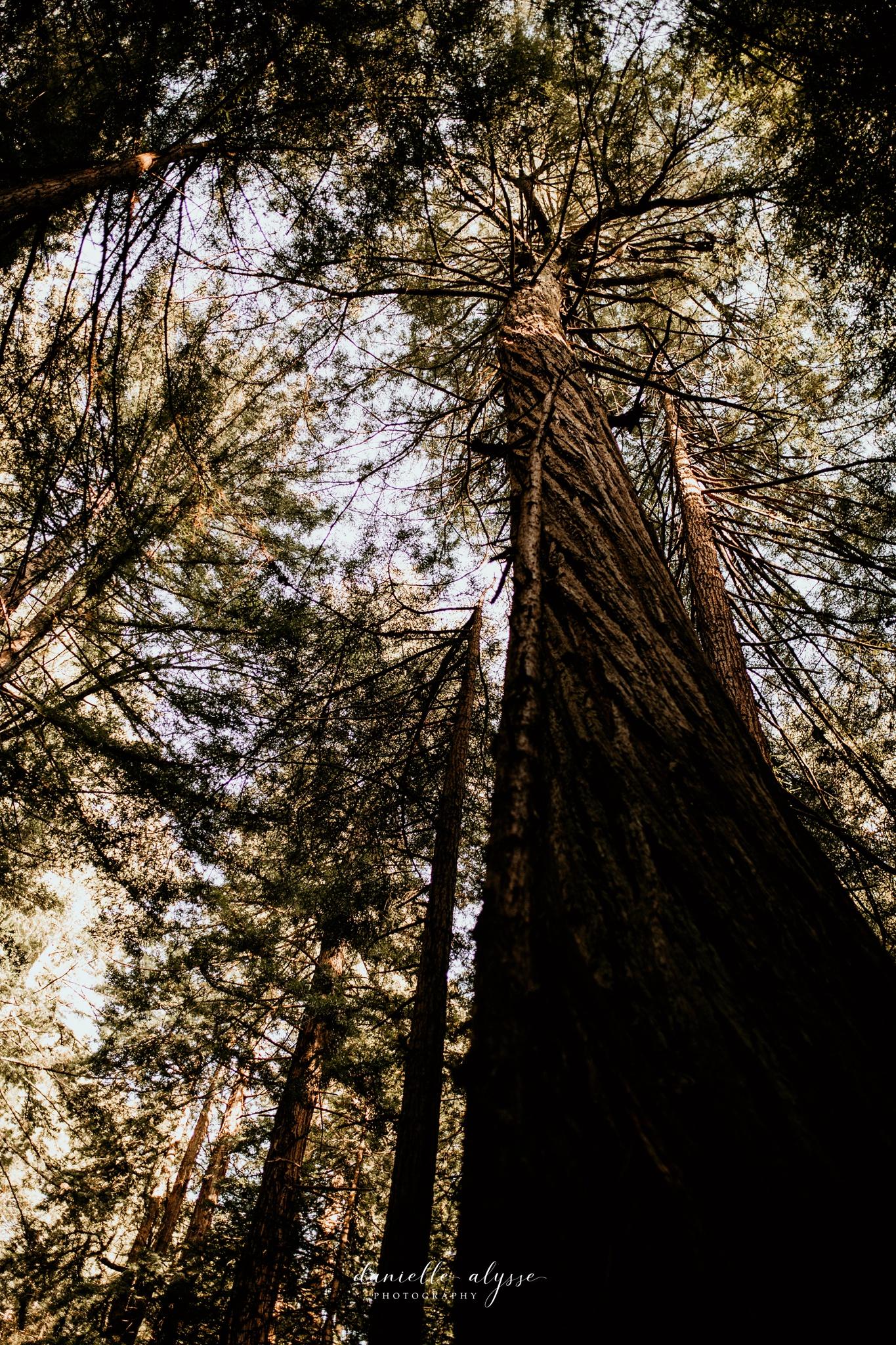 180503_engagement_bianca_muir_woods_mill_valley_danielle_alysse_photography_bay_area_photographer_blog_18_WEB.jpg