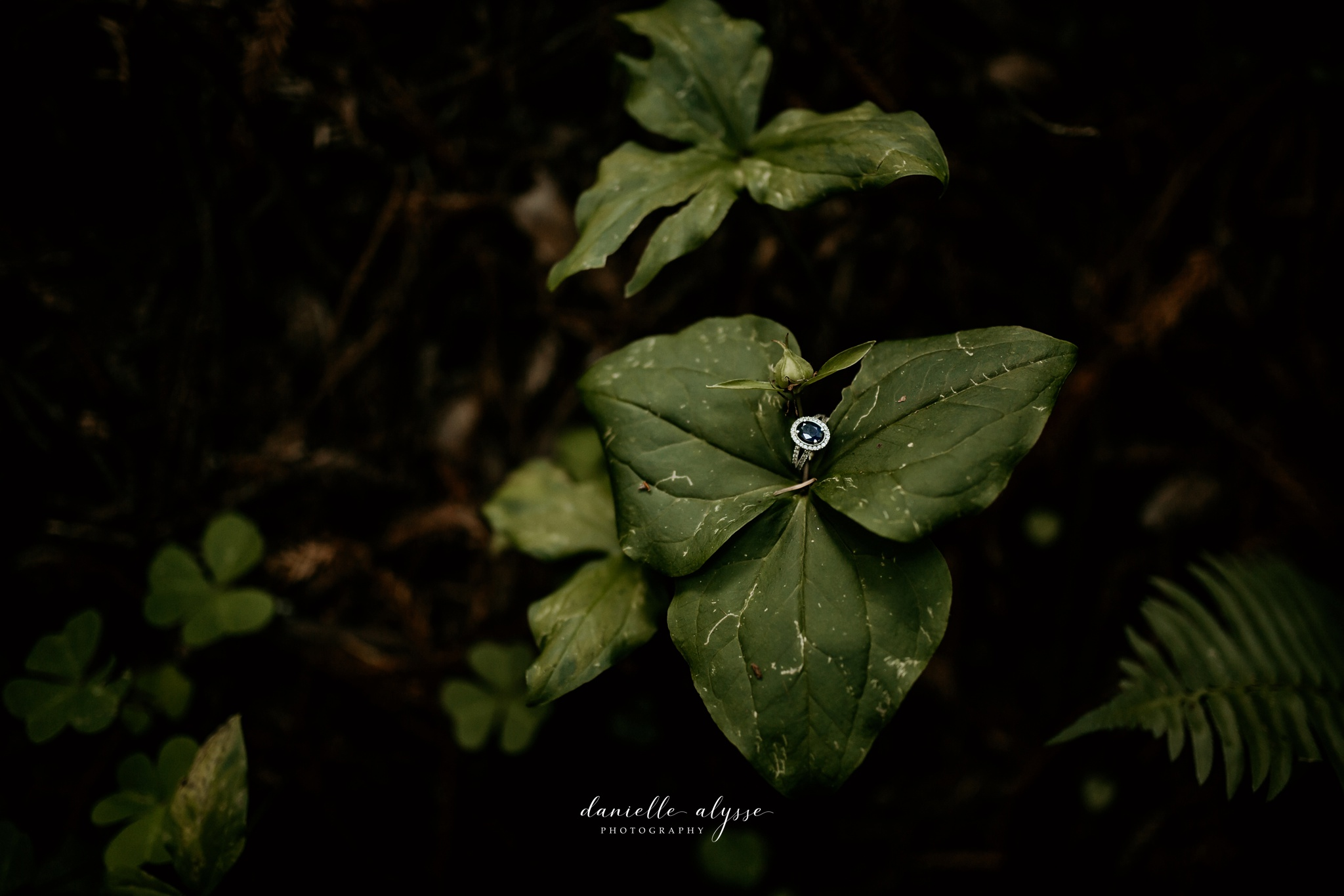 180503_engagement_bianca_muir_woods_mill_valley_danielle_alysse_photography_bay_area_photographer_blog_40_WEB.jpg