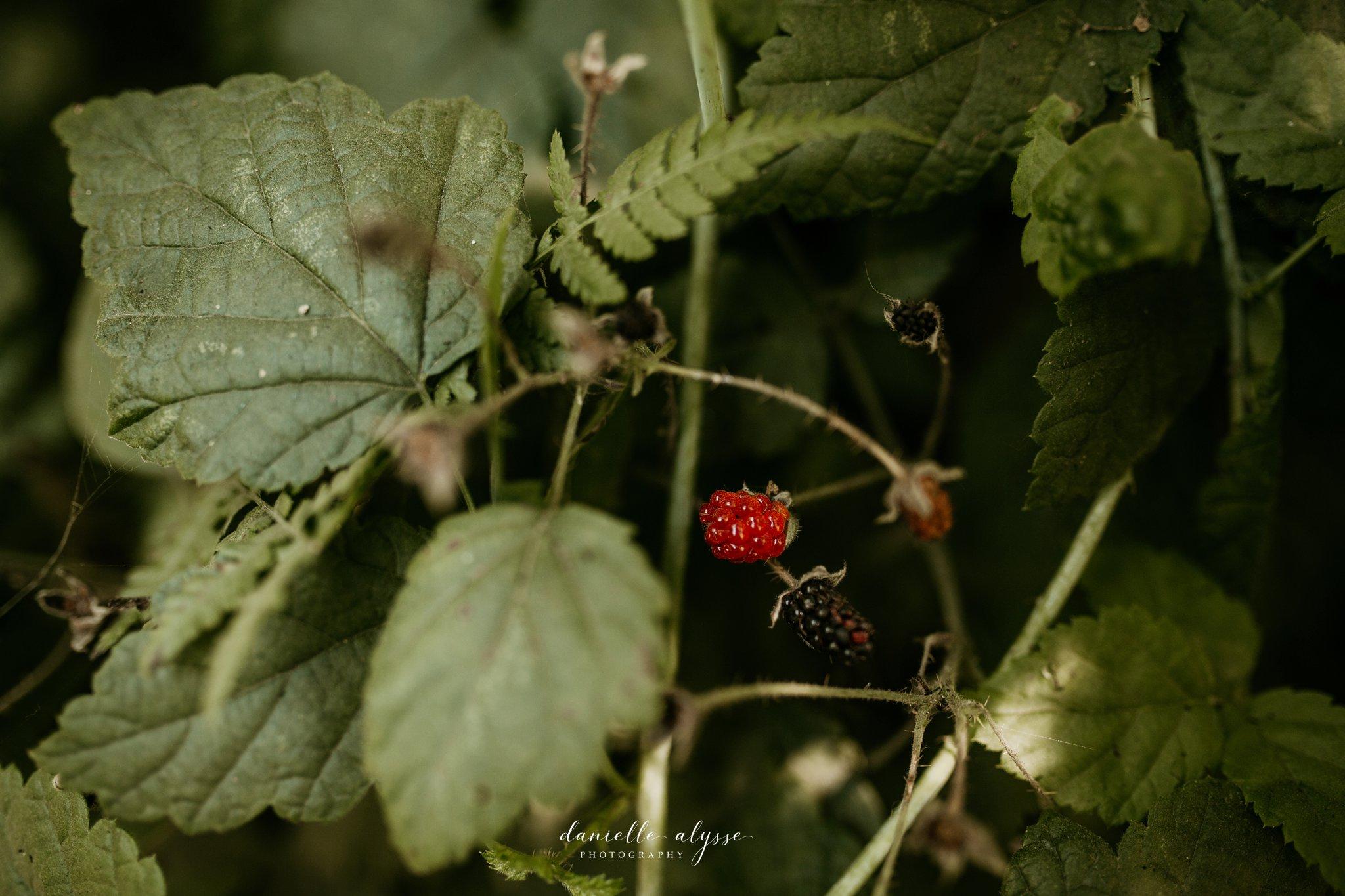 180720_travel_washington_destination_seattle_danielle_alysse_photography_blog_218_WEB.jpg