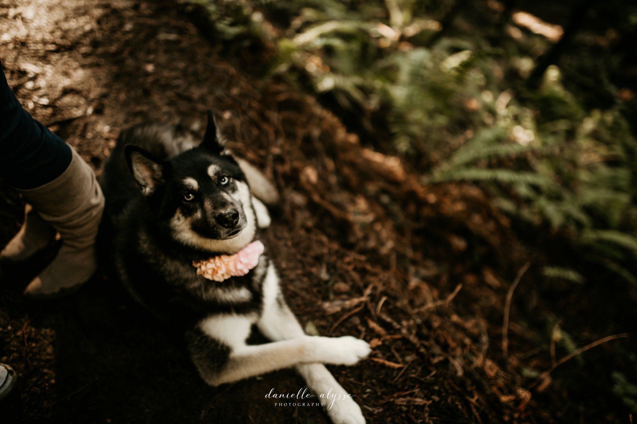 190205_engagement_jen_steven_muir_woods_mill_valley_danielle_alysse_photography_peek_6_WEB.jpg