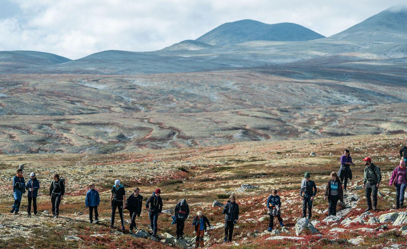Her gås det manngard i leting etter kulturminner.  Foto: Rebecca Nedregotten Strand.