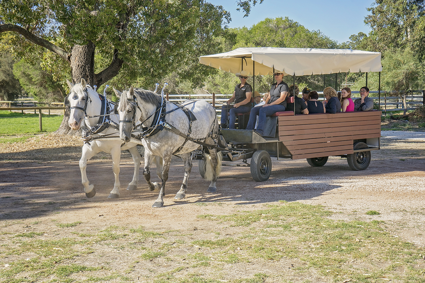 Guests enjoyed horse and wagon tours of the facility