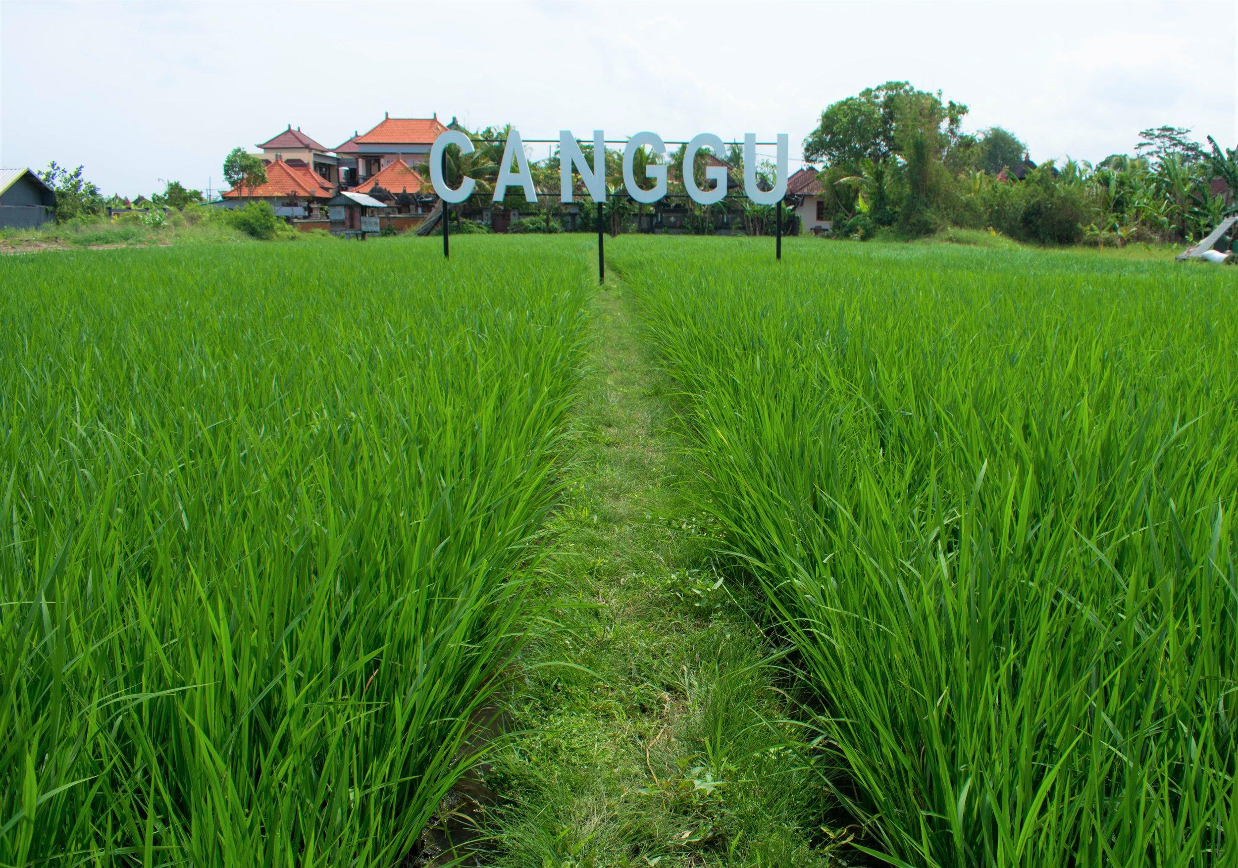 Rice Fields I.jpg