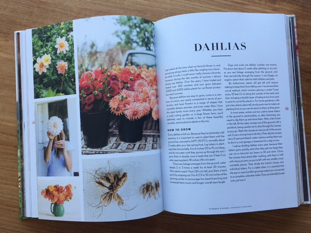 Floret Dahlias.jpg