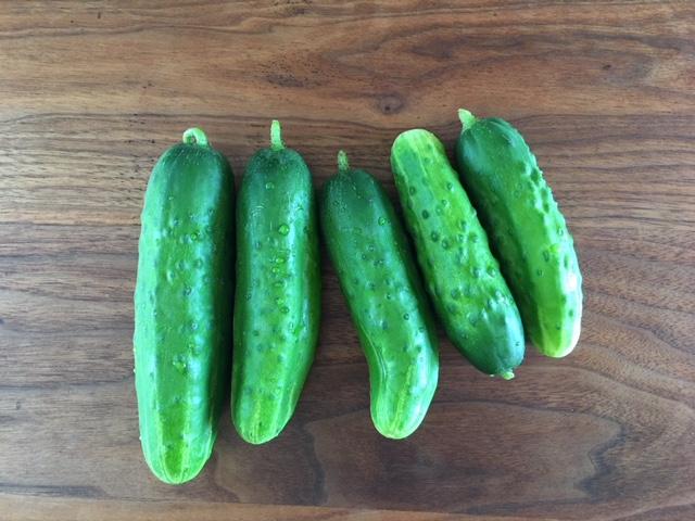 row 7 cucumbers.jpg