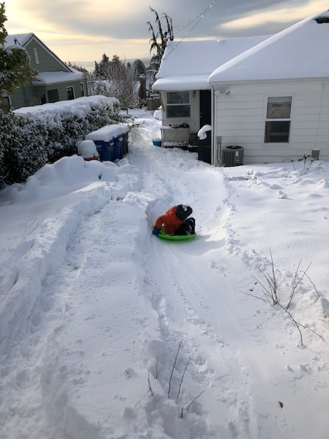 backyard sled.jpg