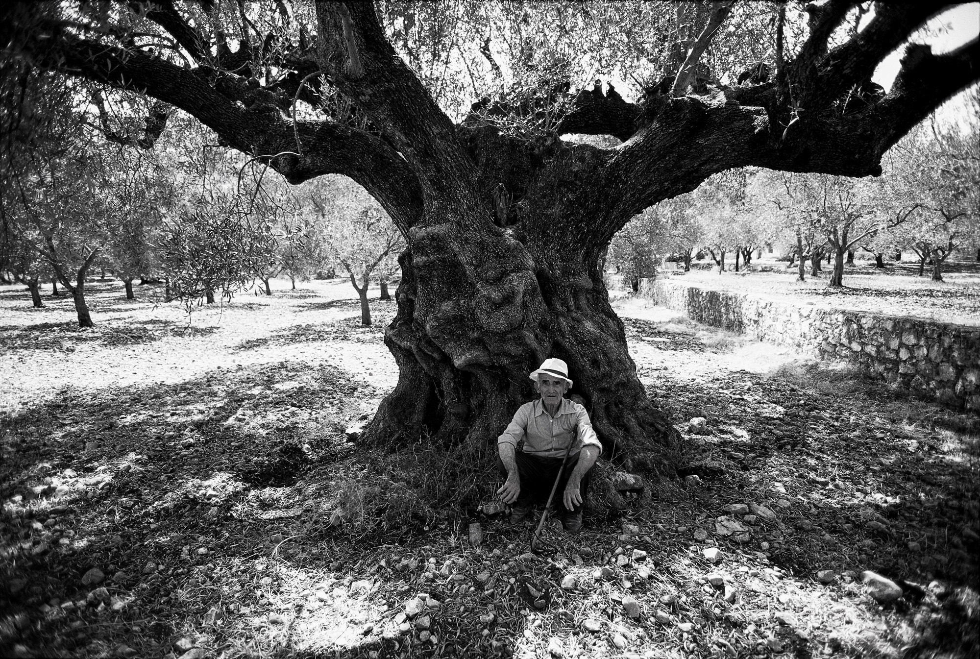 98 year old olive orchard owner, Zakintos, Greece