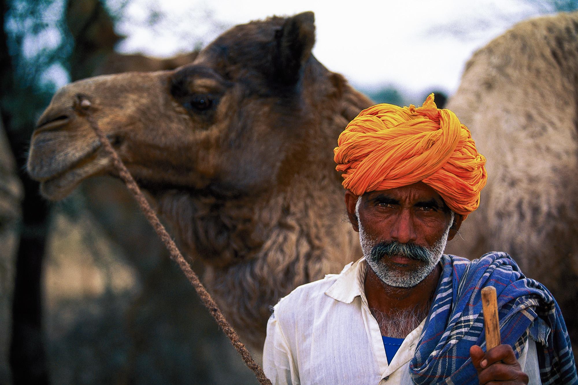 Camel herdsman, Rajasthan, India