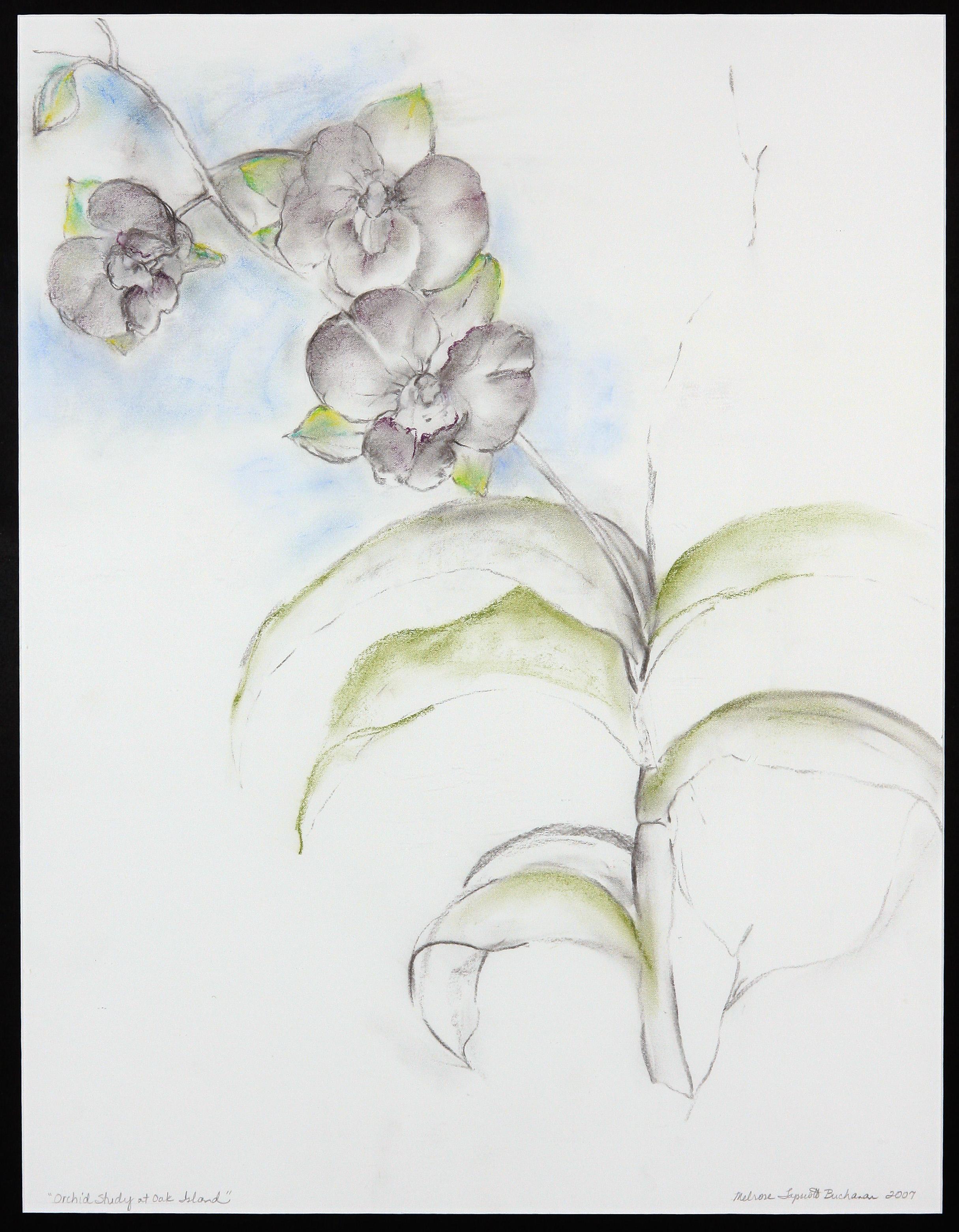 Orchard Study at Oak Island