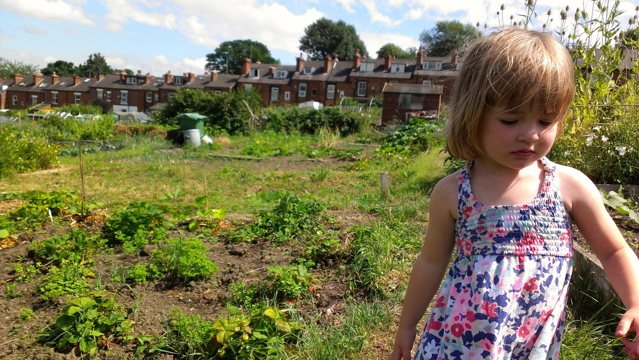 Delilah at my parent's allotment in Leeds (2013)