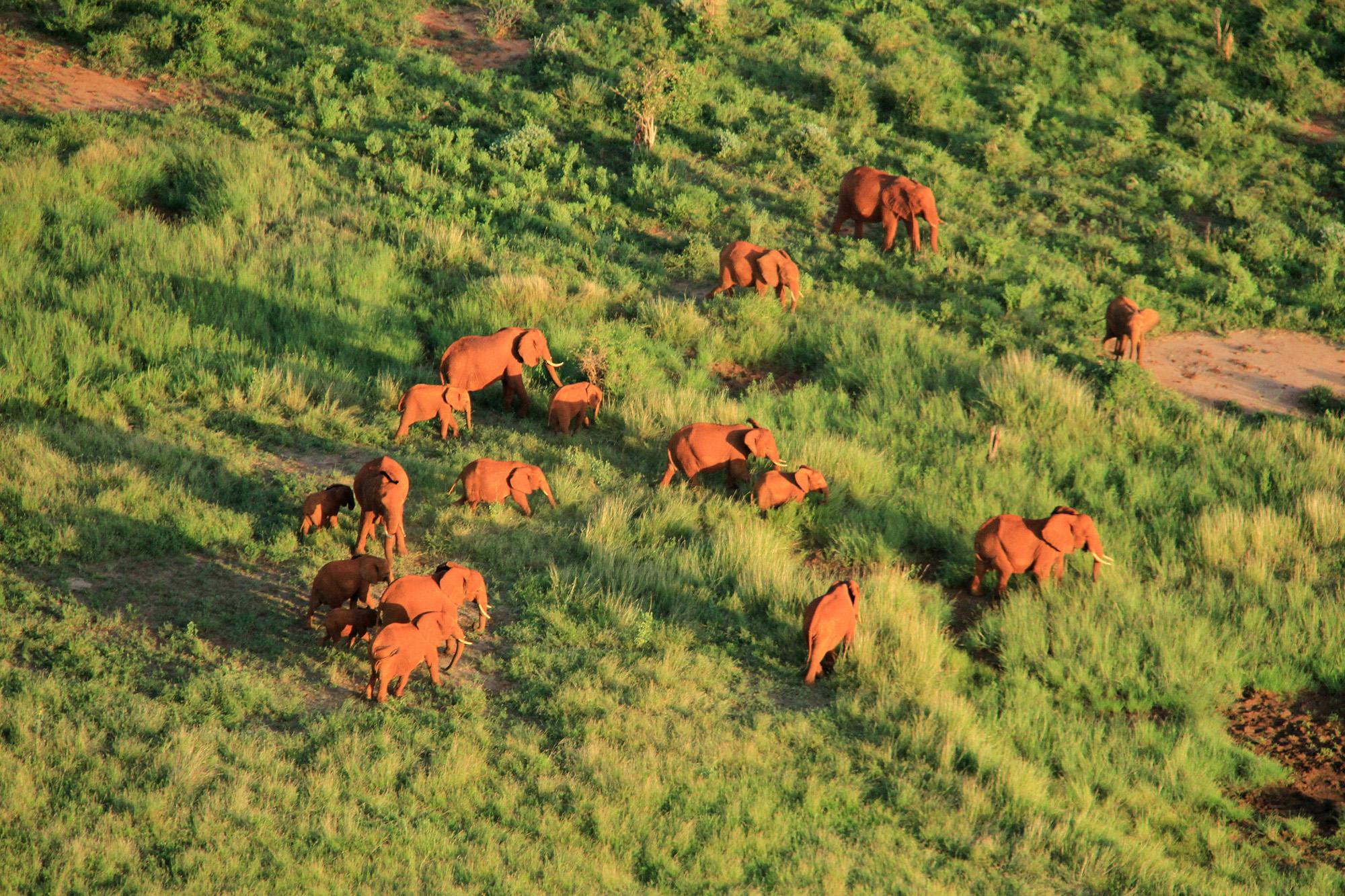 evening elephants of Tsavo.JPG