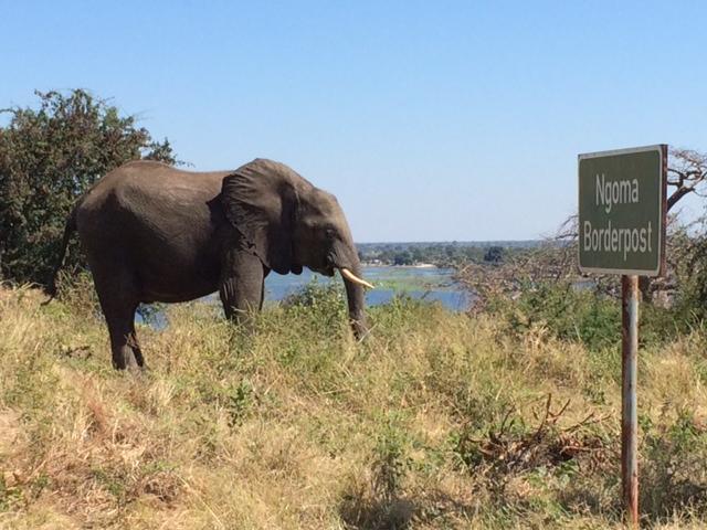 An elephant at the border.