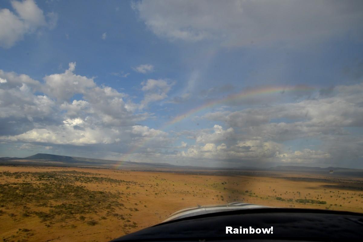 FDB_3-rainbow-serengeti.jpg