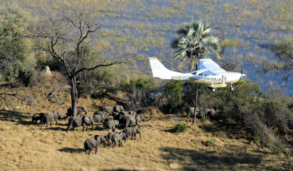 Dr. Mike Chase was the principal investigator for the Great Elephant Census and flew surveys in Botswana, Kenya, Ethiopia and Angola.