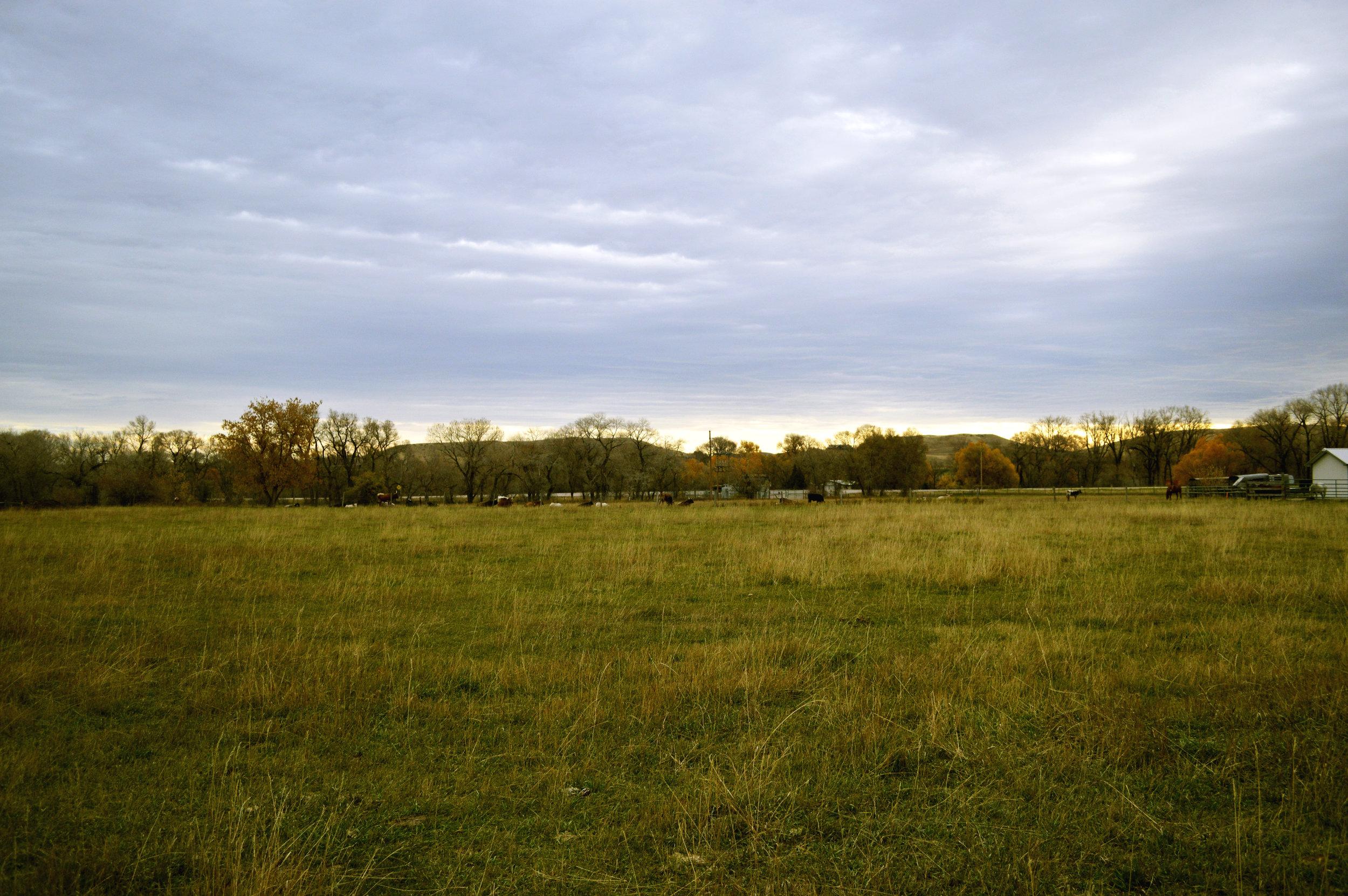 longhorn-7.jpg