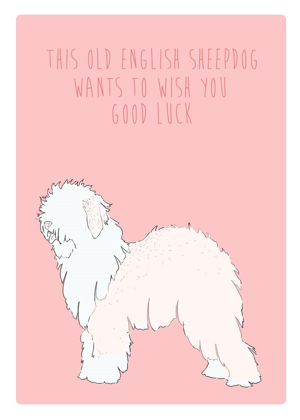 SHEEPDOG CARD.jpg