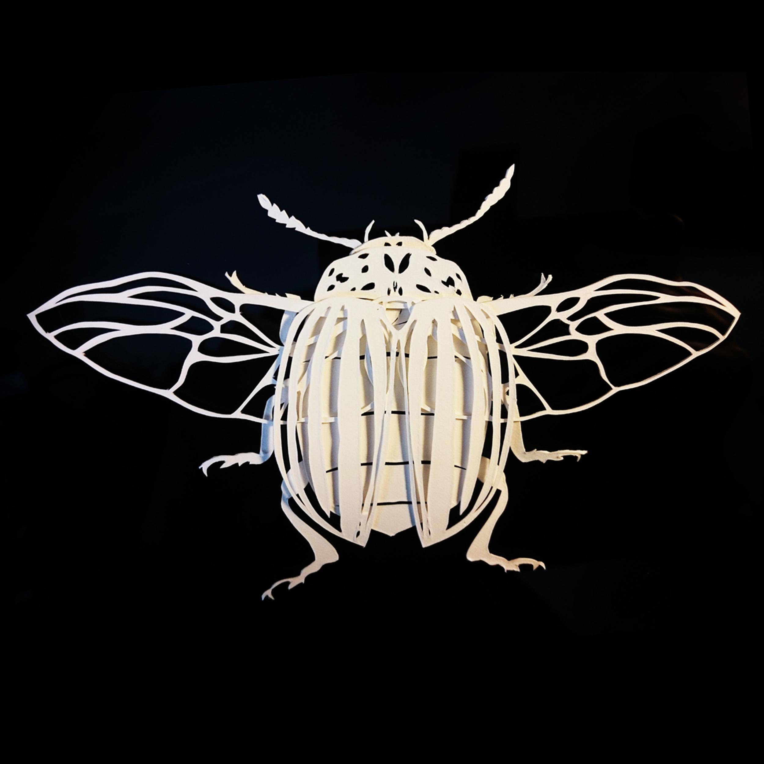 Leptinotarsa decemlineata -papercut