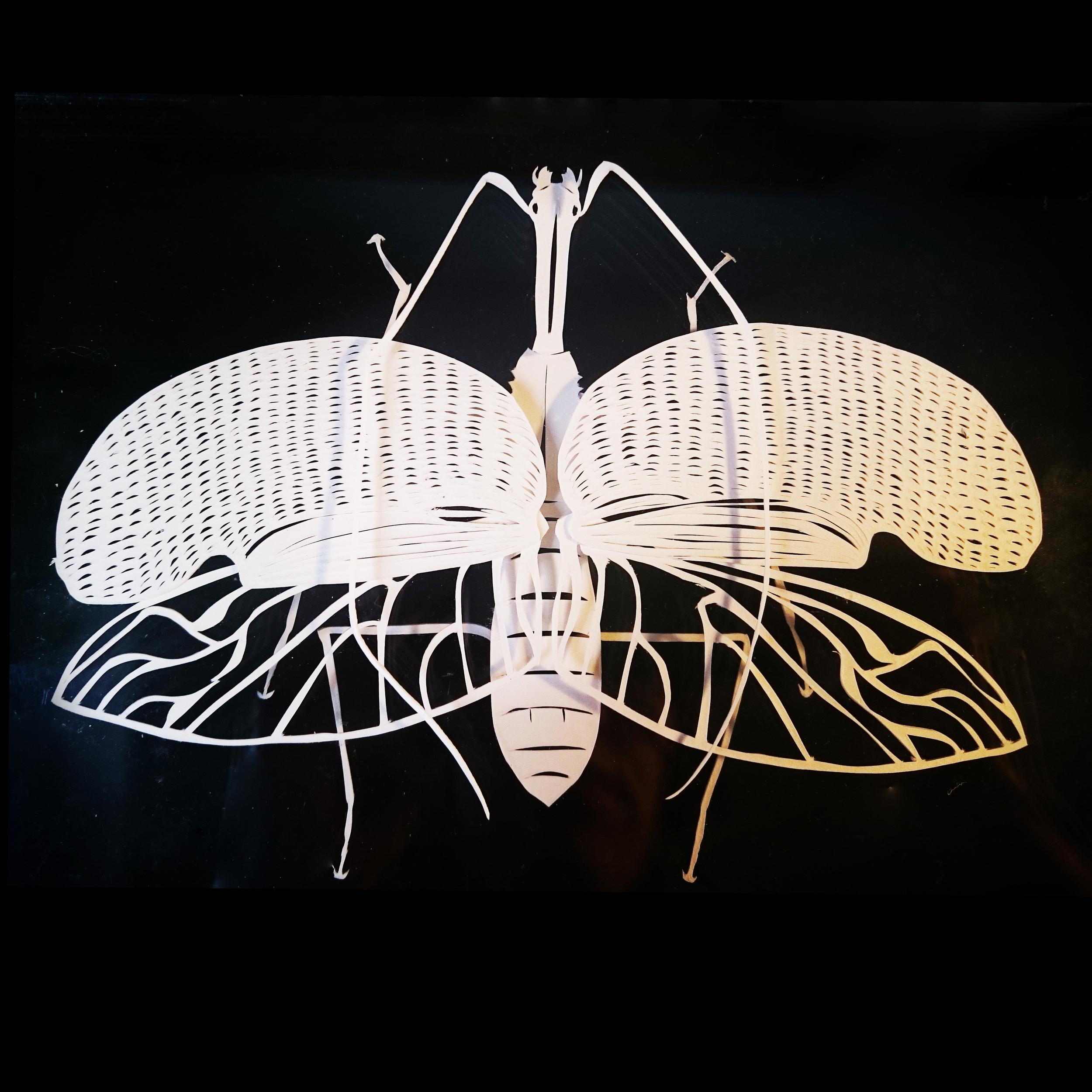 Mormolyce phyllodes - papercut