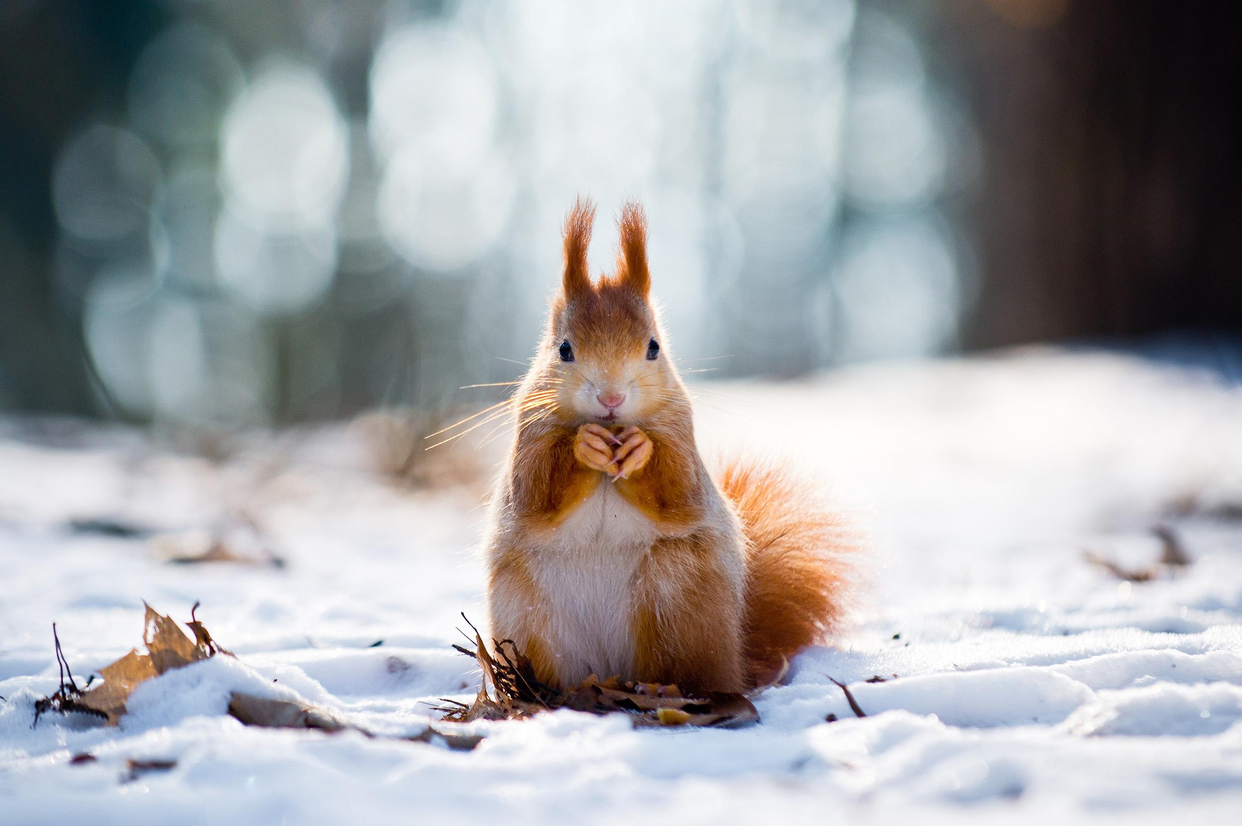 WinterSquirrel.jpg