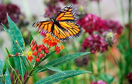Norma-Gibbs-Butterfly-Park