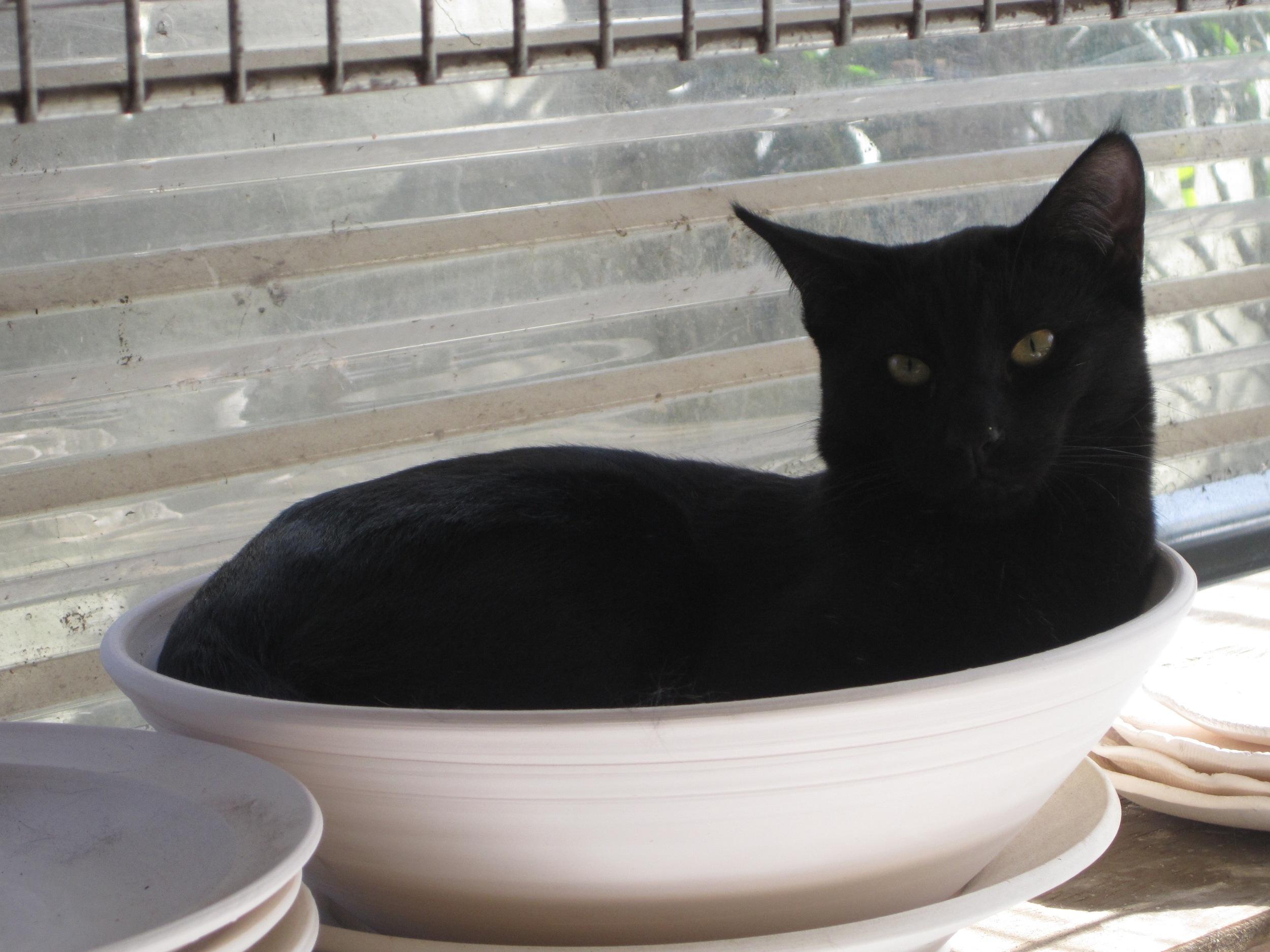 Tenzing in a bowl!