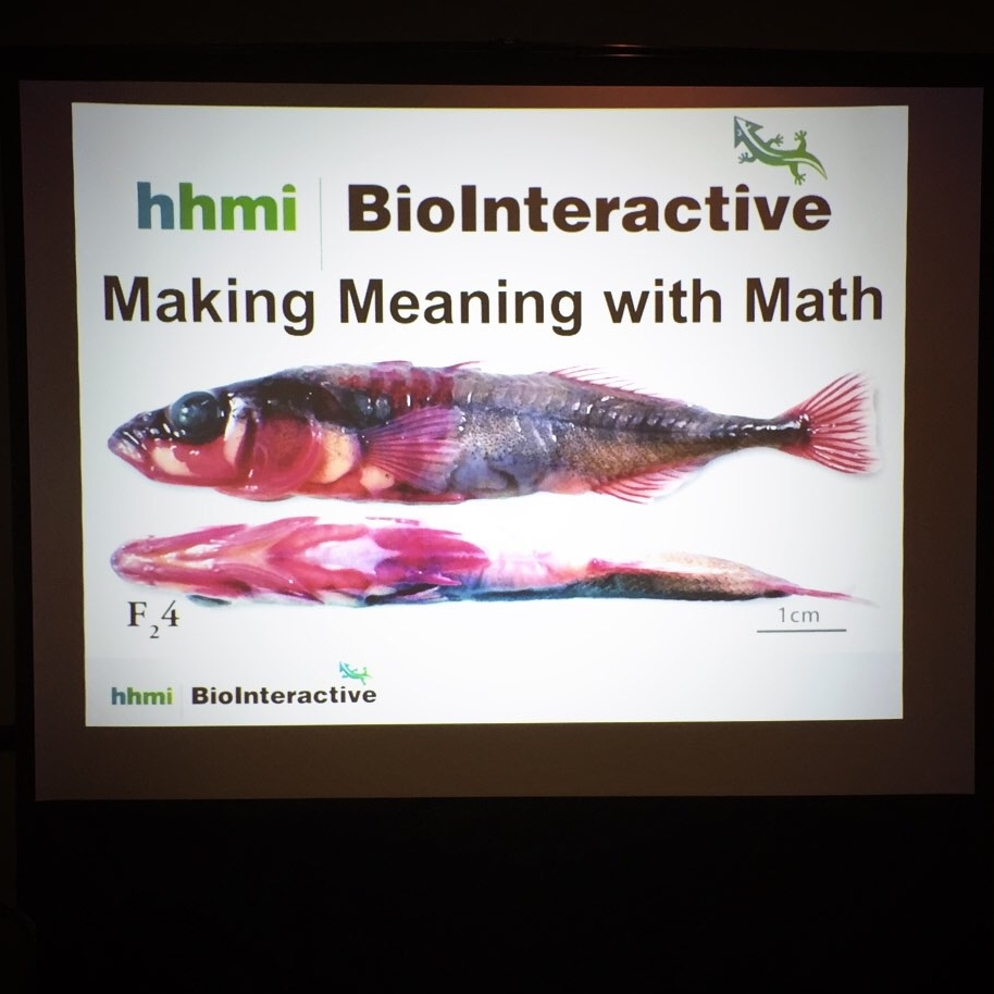 I'll see your presentation on mathematics, and raise you a hi-def photo of a dead Stickleback.