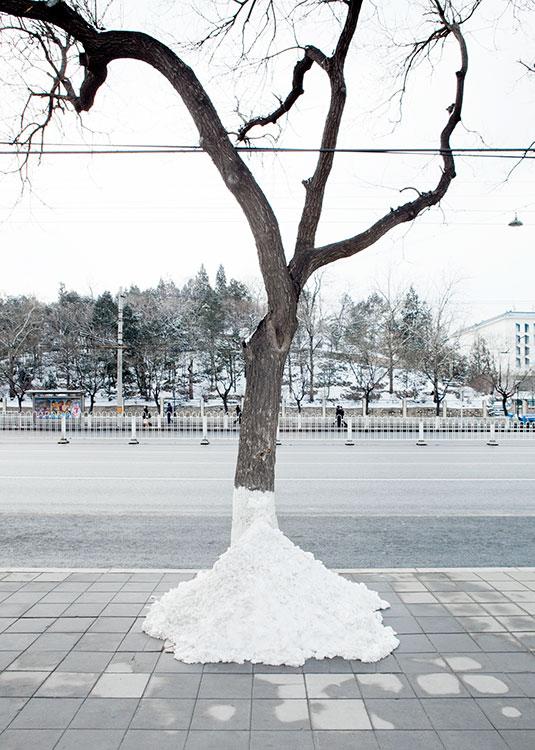 Boom Sneeuw