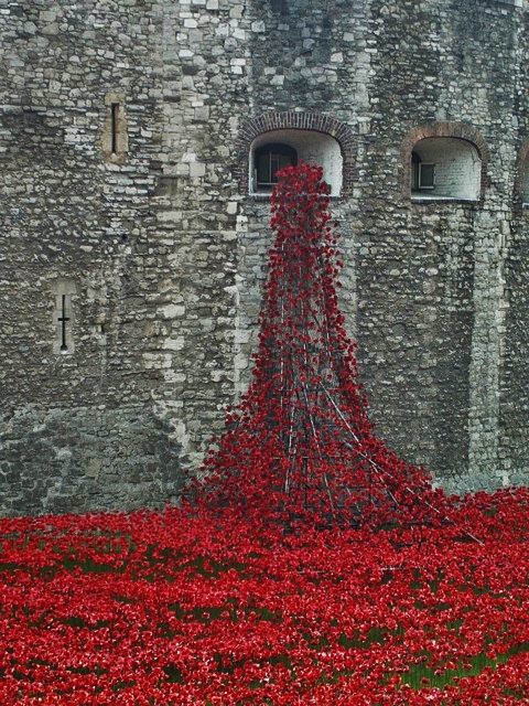 Photo Credit - Poppies at the Tower of London by Penny Mountain