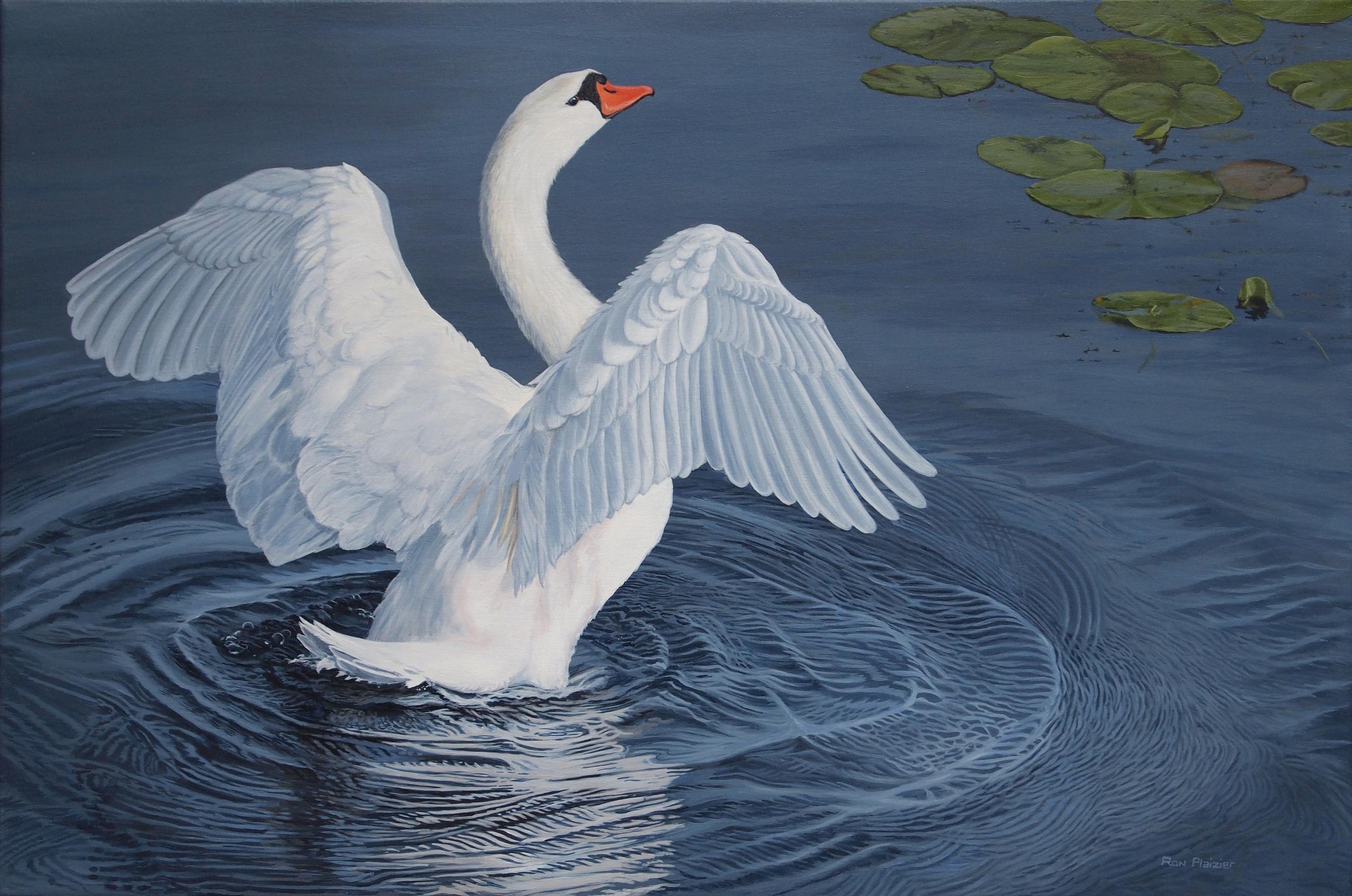 Water Dancer - Mute Swan