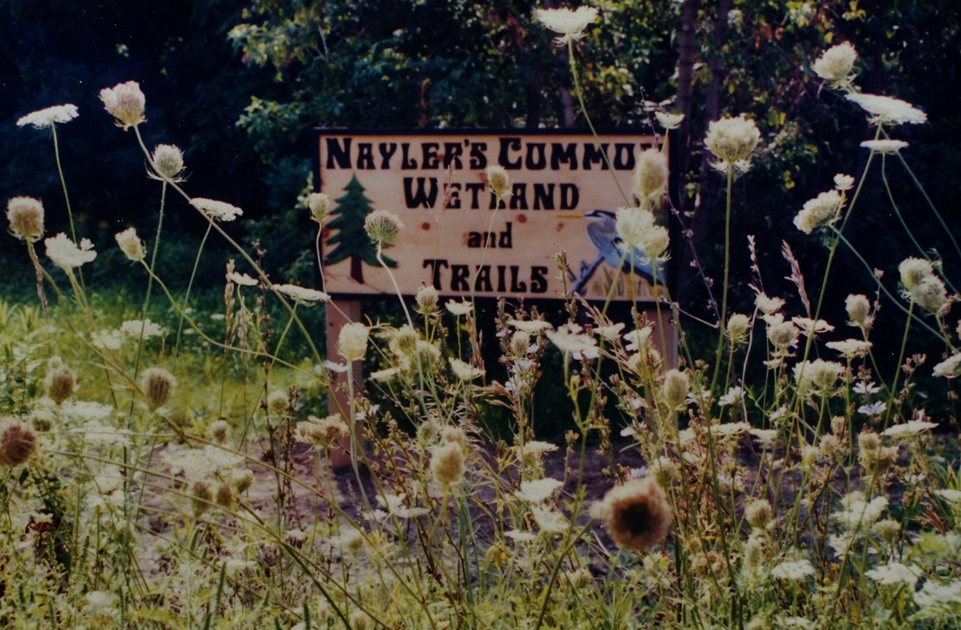 Nayler's Common (2).jpg