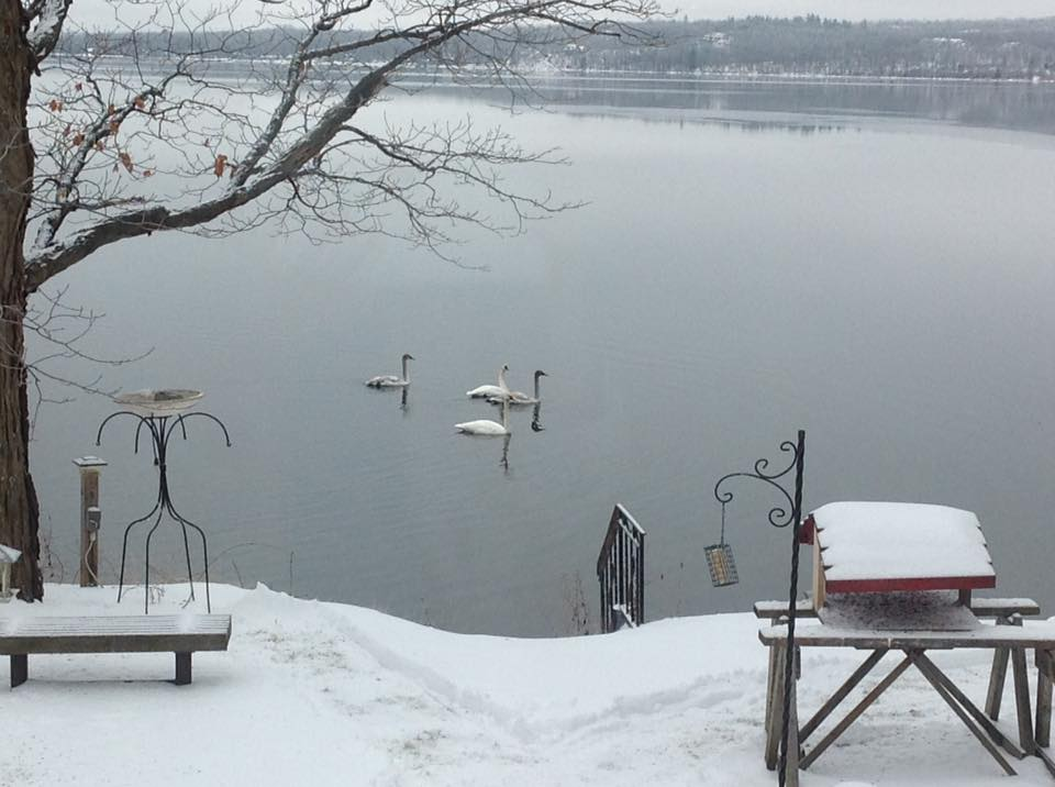 Photo of Crowe Lake by Celia Murray
