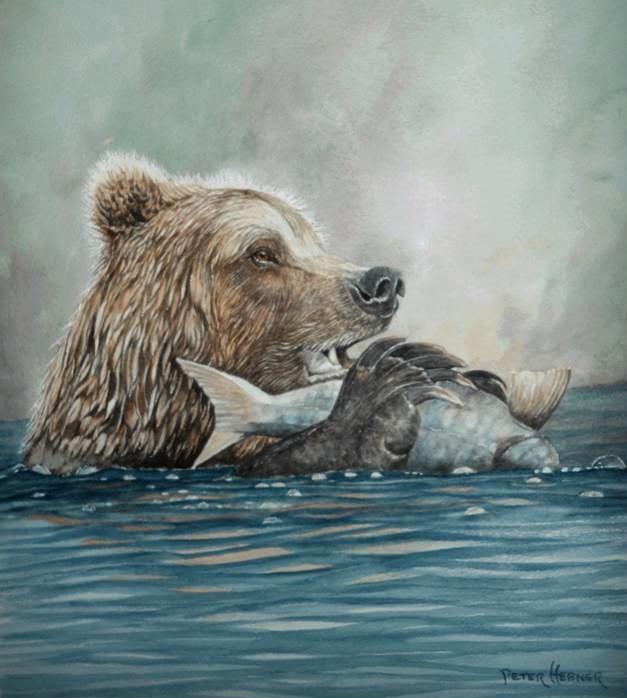 Hebner bear.jpg