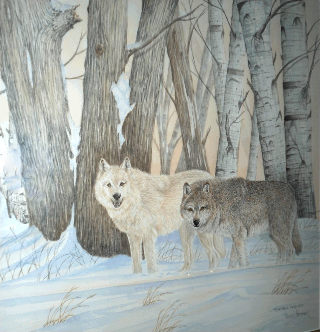 Hebner wolves.jpg